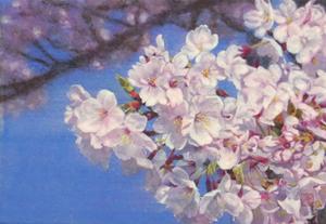 「桜花」No.1